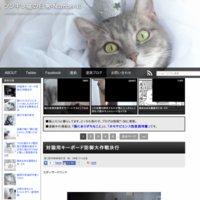 ツンギレ猫の日常-Number40